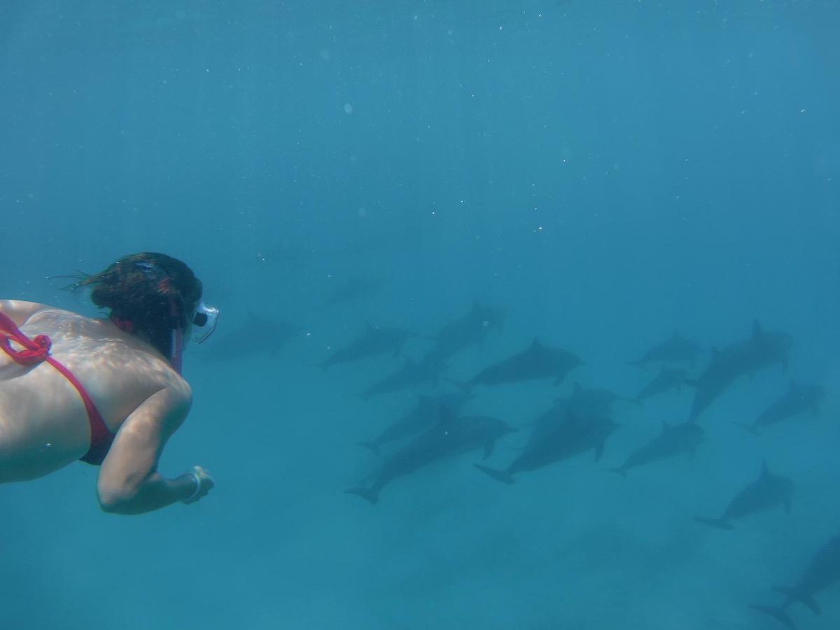dolphins capitan cook kona hawaii